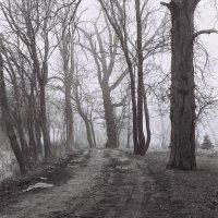 В старом парке :: irina Schwarzer