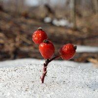 Остатки зимних витаминов птички не доклевали.. :: Андрей Заломленков