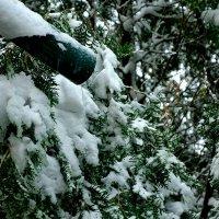Снег в апреле. :: Михаил Столяров