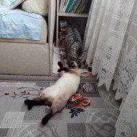 Кошки :: BoxerMak Mak