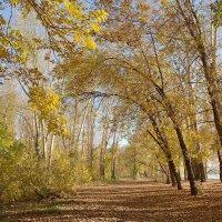 Осенние прогулки. :: Марина Мерц