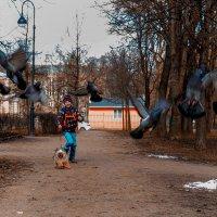 гоняем голубей :: Irina Novikova