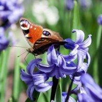 Бабочка на цветке :: владислав завадич