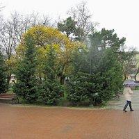 А дождь  идёт :: Валентин Семчишин