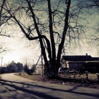 когда деревья были большими. :: Любовь