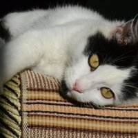 мой кот Пусик :: Ксения Комина