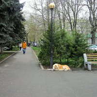 Ожидание :: Валентин Семчишин