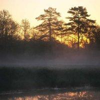 Туманное утро на Пре :: Сергей Курников