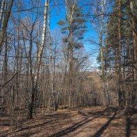 Свет и тени апрельского леса... :: Владимир Жданов
