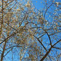Небо весны :: Елена Семигина