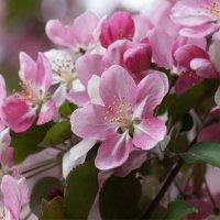 Весна пришла :: Наталия Григорьева