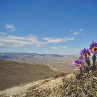 С востока приходит весна... Сон-трава на Эчкидаге... :: Сергей Леонтьев