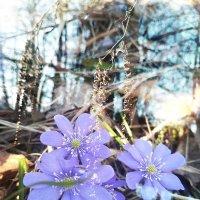 солнечный апрель :: Любовь