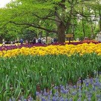 Город наполнен тюльпанами :: Liliya Kharlamova