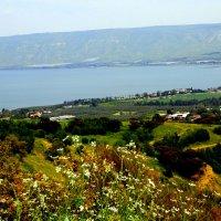 Берег Галилейского озера :: Аркадий Басович
