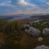 Весенний, туманный рассвет :: Фёдор. Лашков