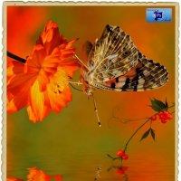 Ягодки и бабочка. :: Anatol L
