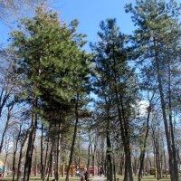 В городском парке :: Нина Бутко