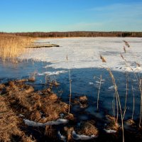 Весна,апрель,опять морозно... :: Нэля Лысенко