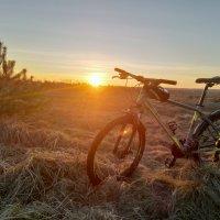 ВЕЛОвечер в закатном солнце :: Алексей Шехин