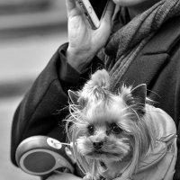 Уличный портрет. :: john dow