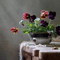 Анютины глазки :: Елена Татульян