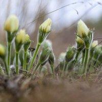 Весенние цветы :: Андрей Щукин