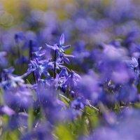 Такая земная краса цветёт на открытых полянках :: Татьянка *