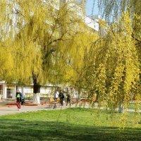 Весна пришла в город :: Геннадий Худолеев