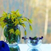 Первые весенние цветы :: Мishka 298