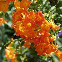 Цветок неизвестный :: Александр Деревяшкин