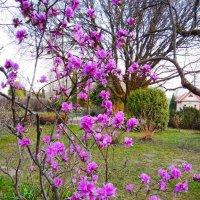 Весна в Ботаническом саду :: Галина Бобкина