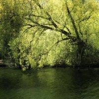 Дерево на берегу :: Татьяна Каримова