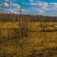 Весной в овраге у ручья :: Виктор Корочкин