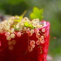 Натуральные витамины в саду :: Светлана Карнаух