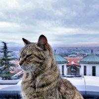 Стамбул. Кот за окном. :: Николай Коротких