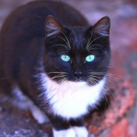 Дикий зеленоглазый котик! :: Штрек Надежда