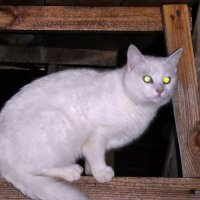 Про батарейки, кошку и глаза... :: Александр Резуненко