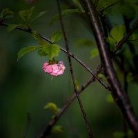 Lonely bud :: Олег Шендерюк