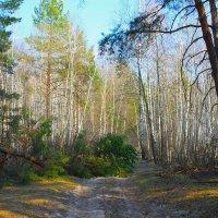 В лесу :: ВАСИЛИЙ САВЧЕНКО