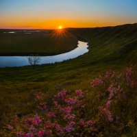 Цветущий миндаль на закате :: Фёдор. Лашков