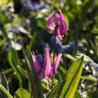 Апрельская трава :: Aнна Зарубина