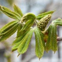Весна идет.... :: Ольга (crim41evp)