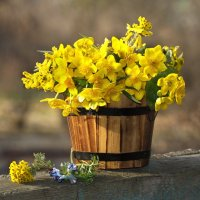 Прощальный золотой букет солнечного апреля :: Ирина Виниченко