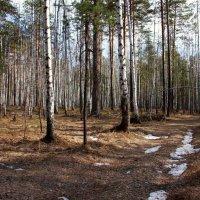 Апрель в проснувшемся лесу... :: Нэля Лысенко