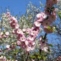 Весны прекрасная пора :: Татьяна Смоляниченко