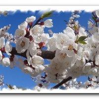 Цветет апрель. :: Зоя Чария