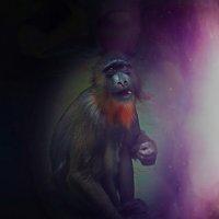 Взгляд с планеты обезьян :: Мила Раменская (Забота)