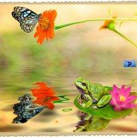 Про бабочек и лягушек... :: Anatol Livtsov