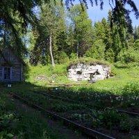 В соловецком ботаническом саду :: Ольга